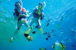 熱帯魚餌づけスノーケル